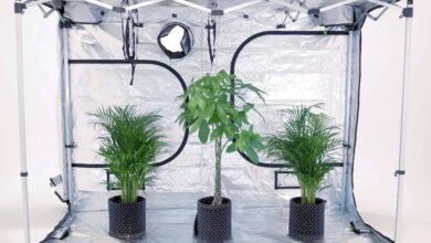 Photo of Why You Need a Grow Tent for Your Indoor Garden